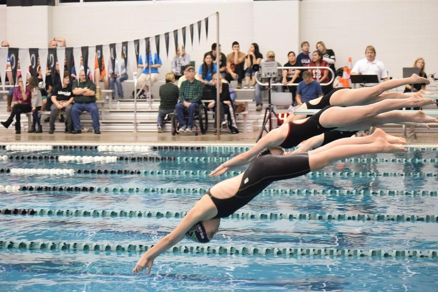Sylvia Rudney dives in to begin her race vs Porter.