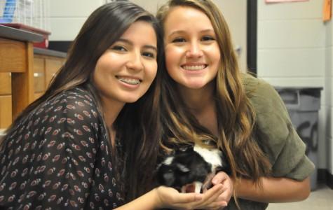 Sarah Martinez and Abby Wolfe hold Avogadra, Mrs. Rosata's class pet.