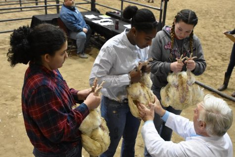 Canceled livestock show leaves FFA students in limbo