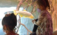 Young visitors watch the fish in the aquarium at the zoo's new Pantanal exhibit.