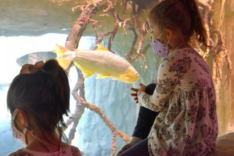 Young visitors watch the fish in the aquarium at the zoo